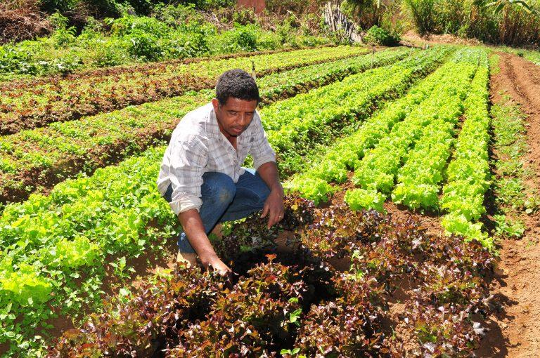 Proposta cria linha de crédito especial para a agricultura familiar na pandemia