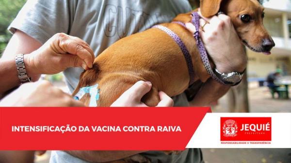 Intensificação da vacinação contra a raiva animal continua